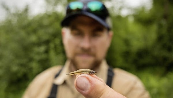Minnows and fish of all sizes can yield clues about the health of a river.
