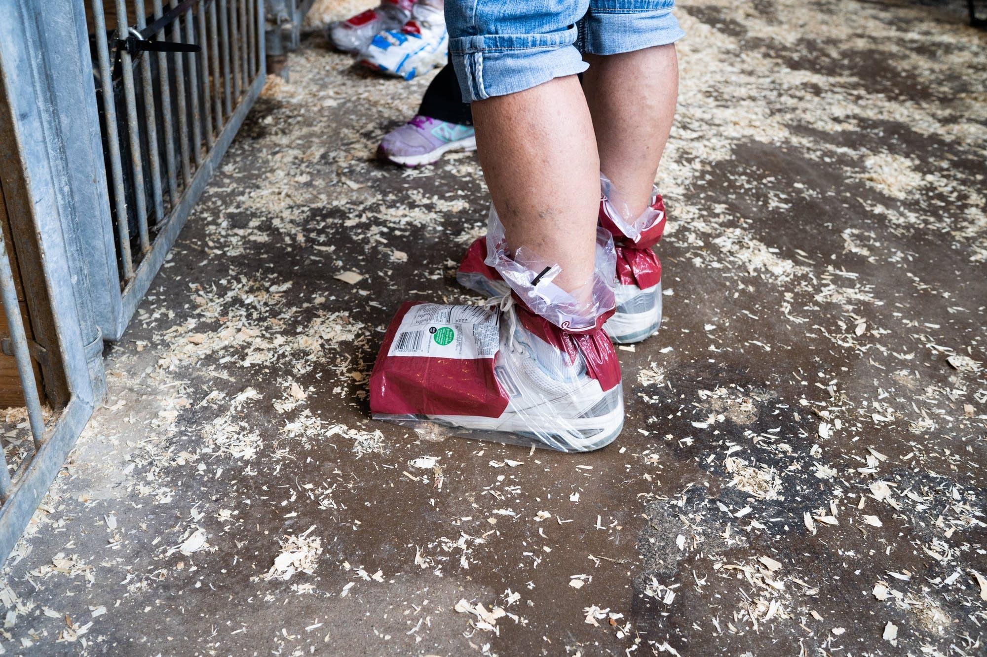 A woman wears bread bags over her shoes inside the swine barn.