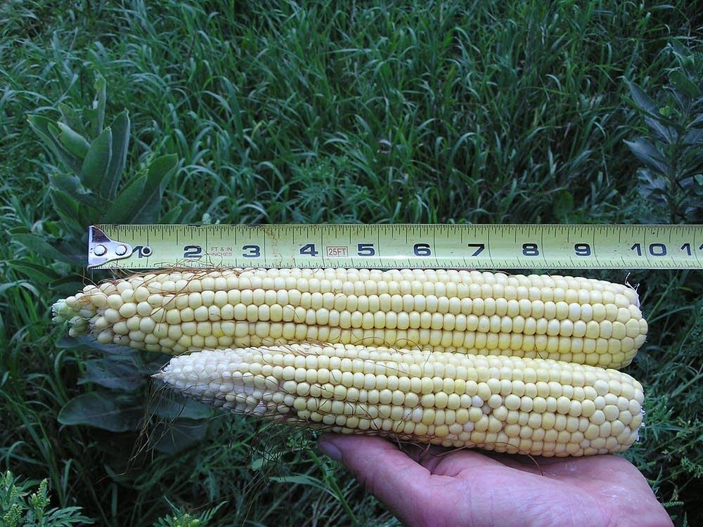 Comparing corn
