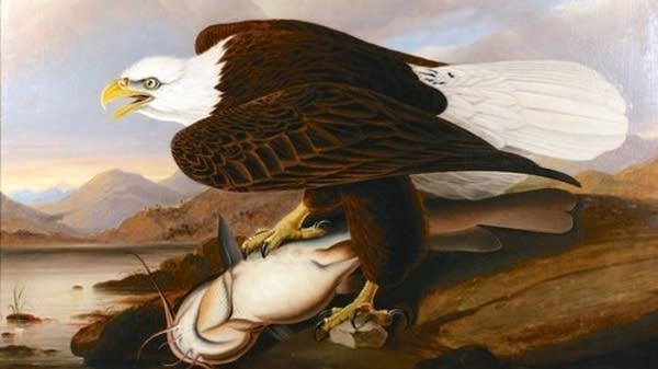 John James Audubon, Bald-Headed Eagle, (on the banks of the Mississippi)