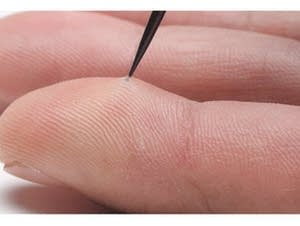 The quill tip in this finger has microscopic, backward-facing barbs.