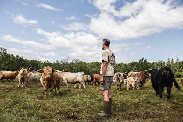 Owner Paul Conklin looks out at his grass-fed beef cattle.