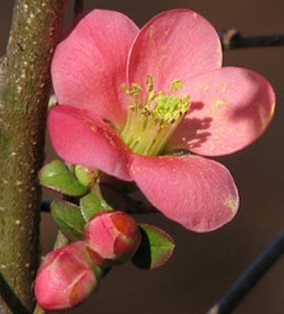 1167af 20090319 flower