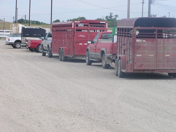 Empty stock trailers at the sale barn