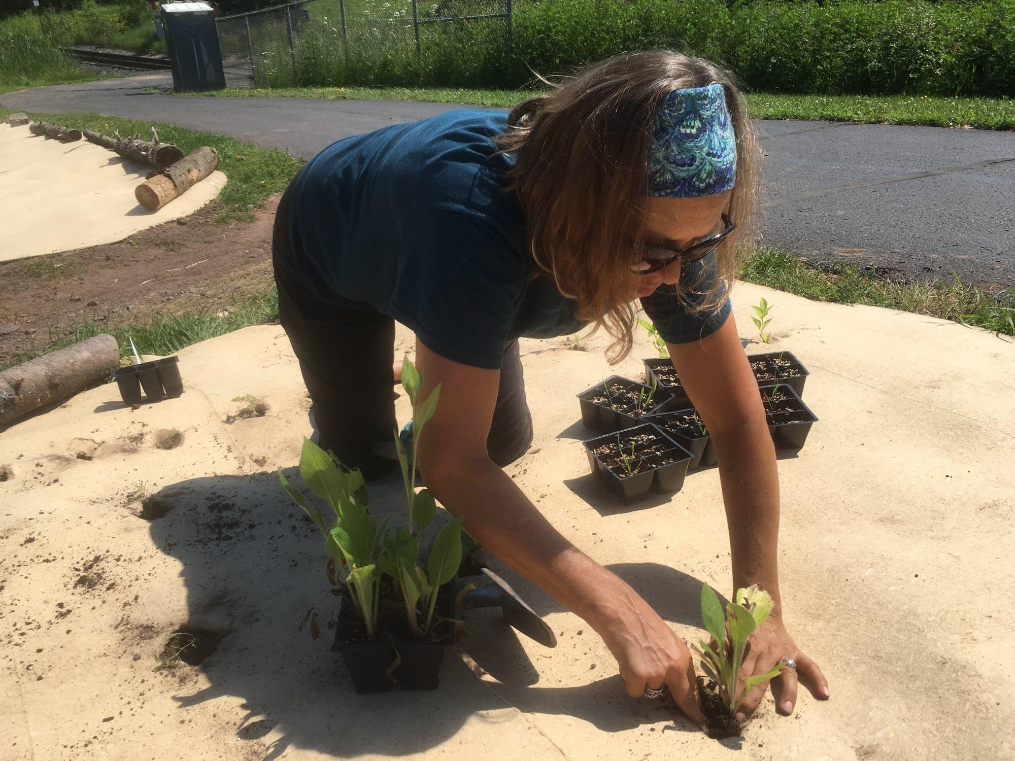 Jennifer Gordon of Duluth plants a seedling.