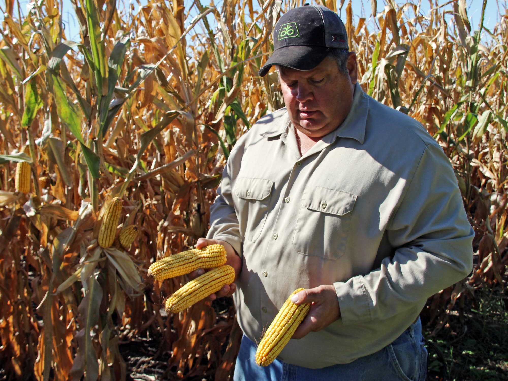 Paap says 1/3 of his corn is sold outside U.S.