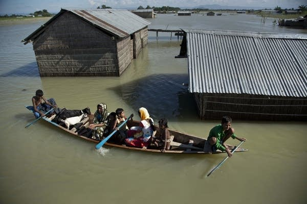 A family and their goats travel on a boat on a flooded neighborhood.