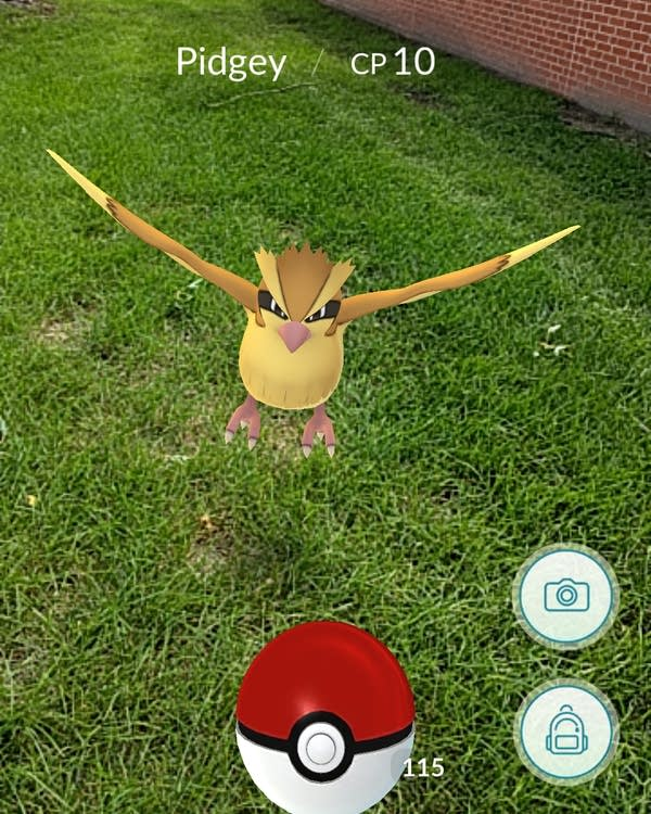 Pidgey Pokémon appears outside North Junior High.