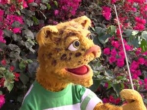 Leopold the Leopard