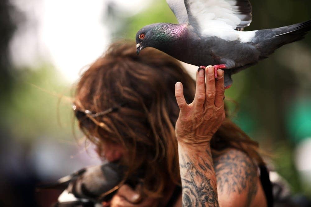 Larry, a bird enthusiast, feeds pigeons