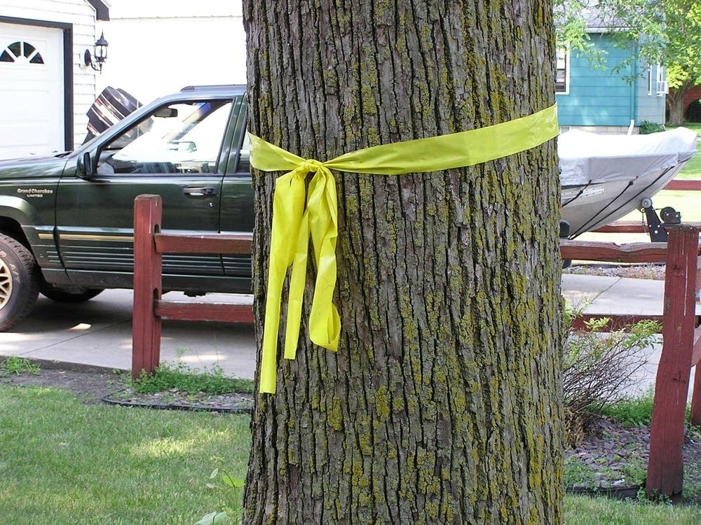 Yellow ribbons at Cody's house in Winthrop