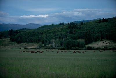 697b00 20140718 elk migration snowmass colo