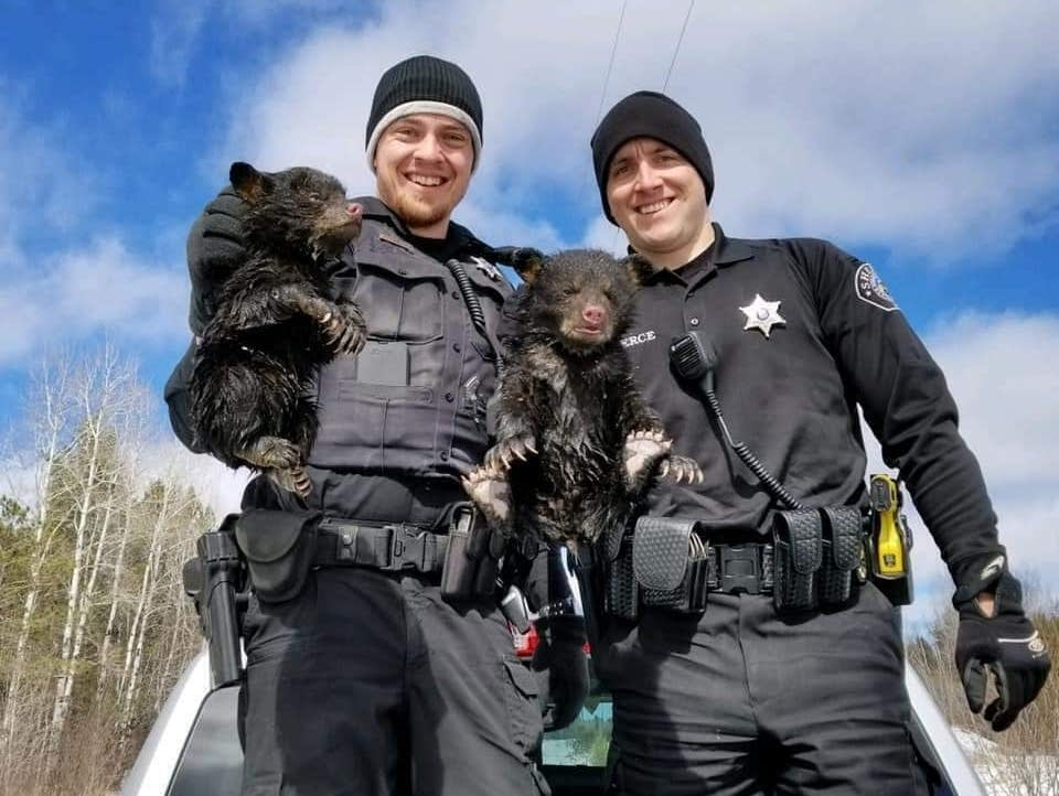 Spring Flooding Cubs Rescued