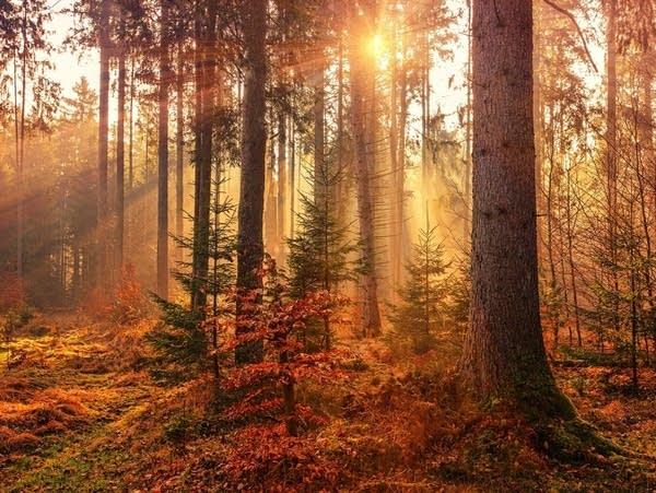 An autumn woodland scene.