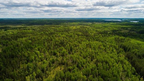 In this aerial view of forests, trees stretch to the horizon.