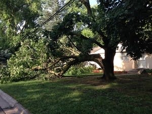 Downed tree in Roseville