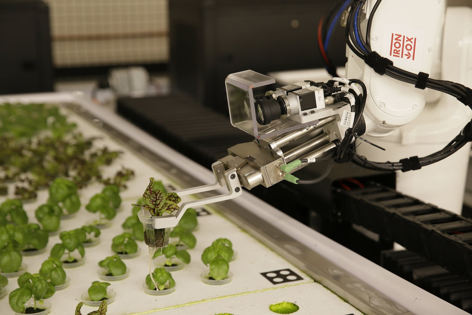 A robotic arm lifts plants being grown at Iron Ox.