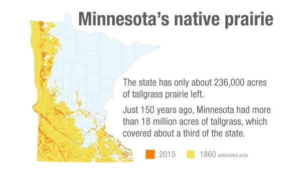 Minnesota's native prairie