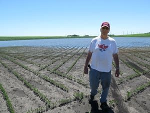 Richard Peterson in his wet soybean field.