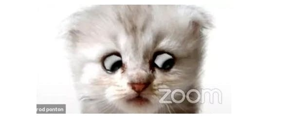 Close up of Zoom face filter, looks like white kitty with big eyes