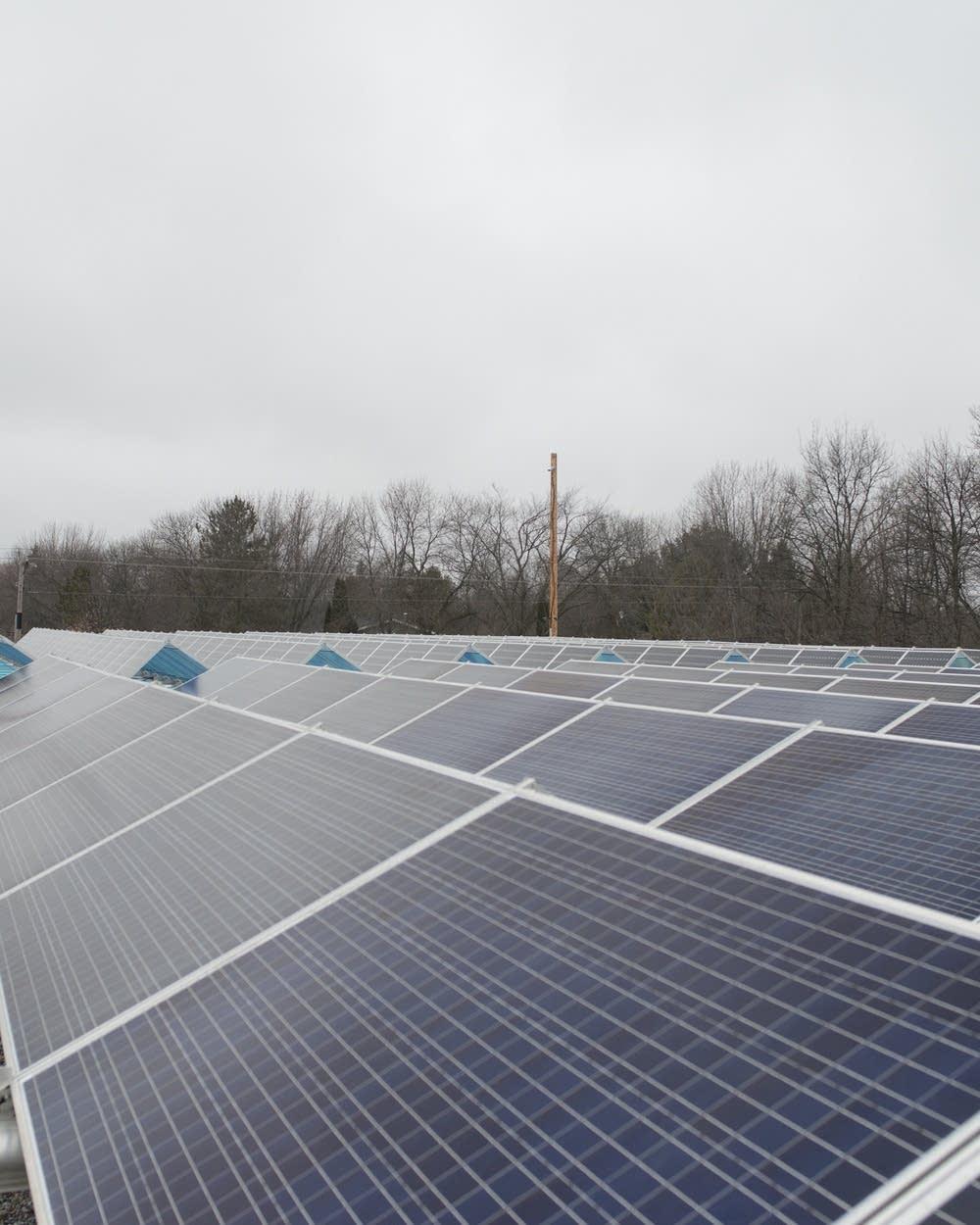 Solar Gardens Minnesota Attorney General Pursues Complaints Mpr News
