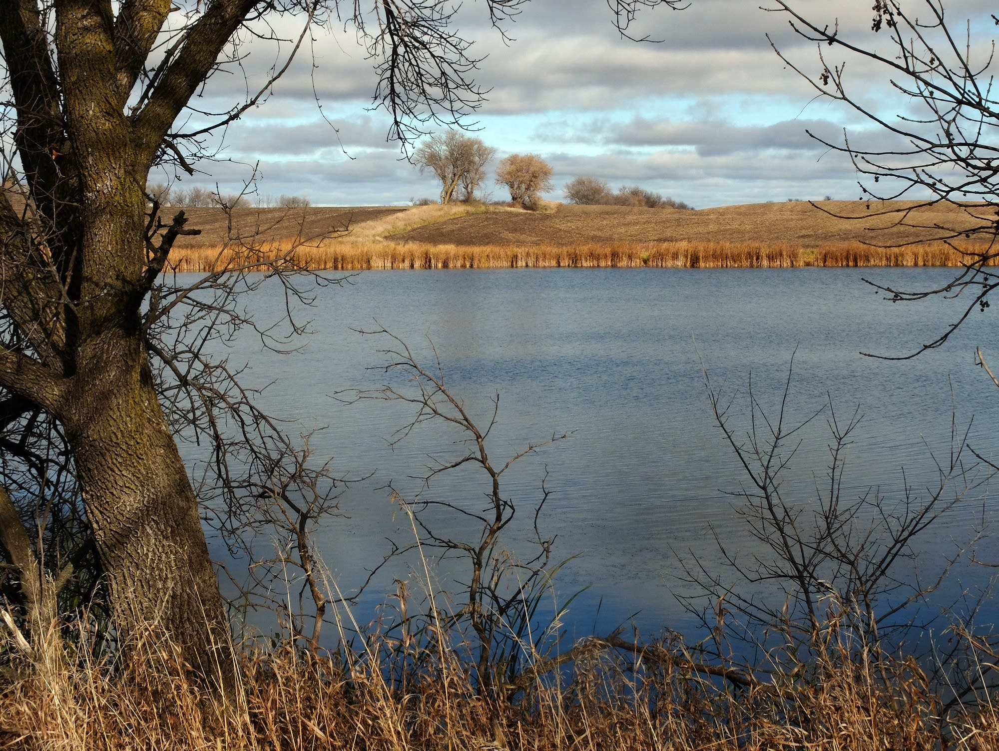 An Otter Tail County lake is nearly surrounded by farm fields.