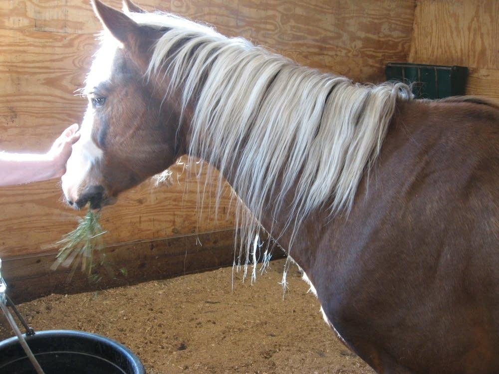 Abandoned stallion