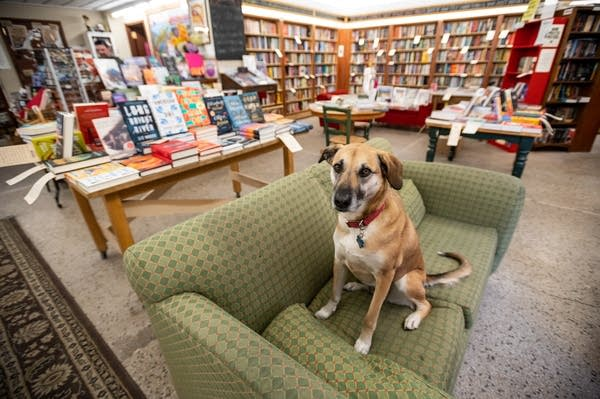 A dog sits on a couch in a bookstore.