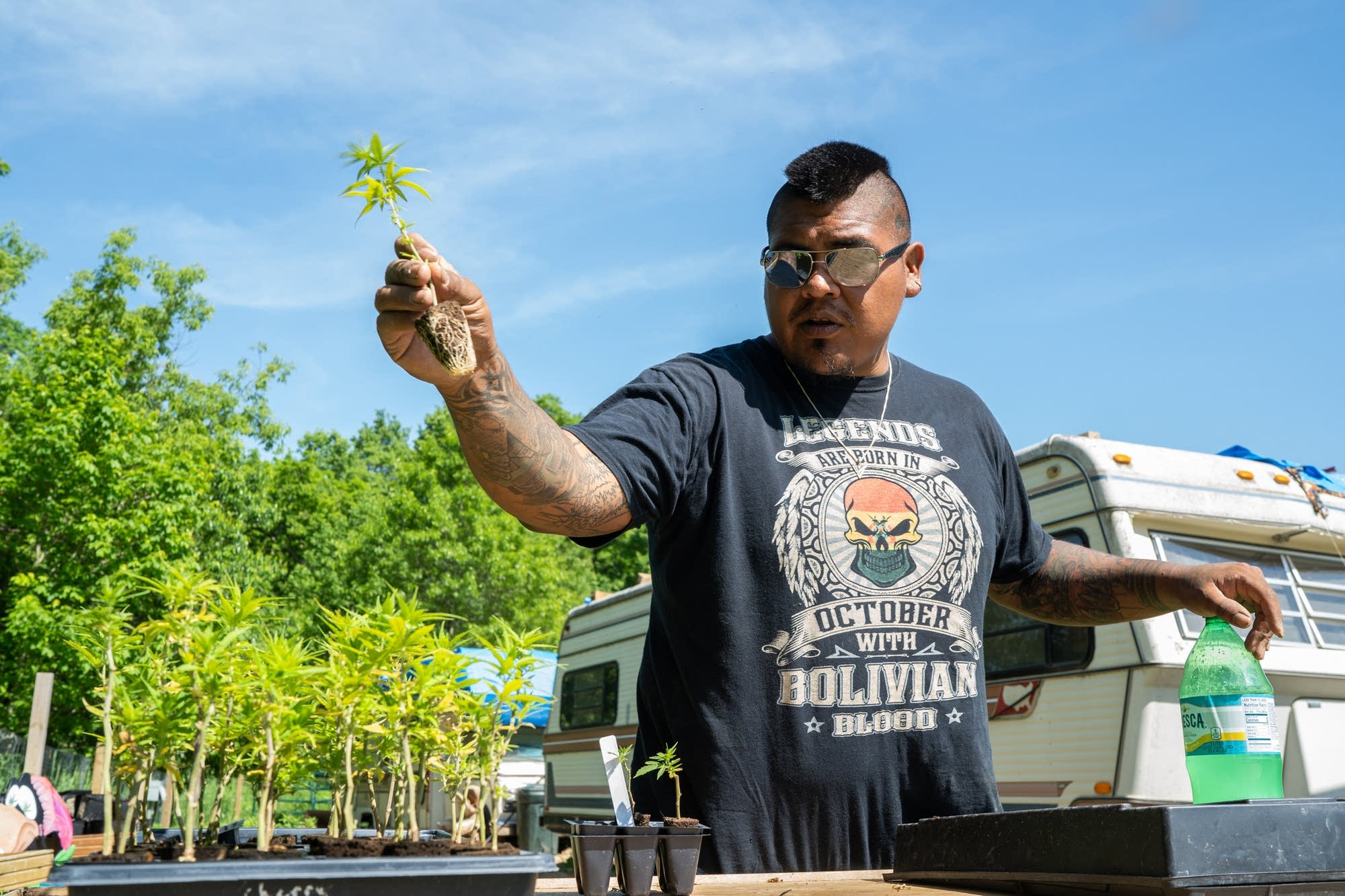 Luis Miguel Hummel checks out one of his hemp plants.