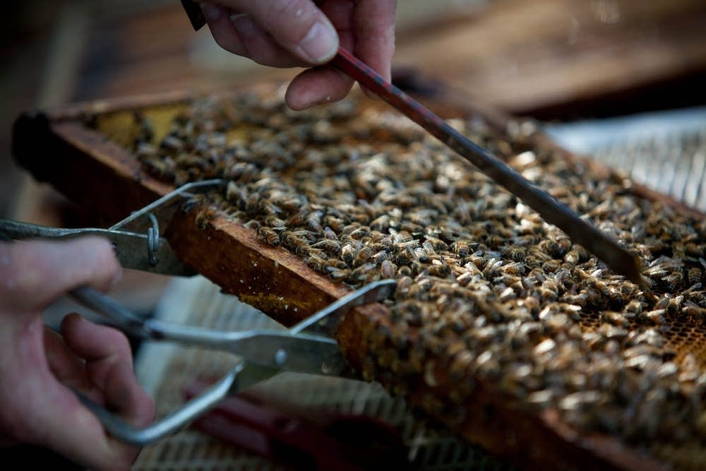 Beekeeping in Minnesota