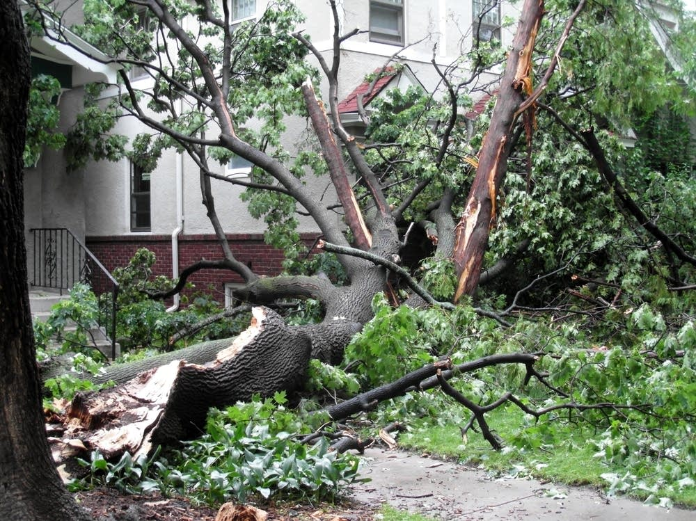 Tree damage in St. Paul