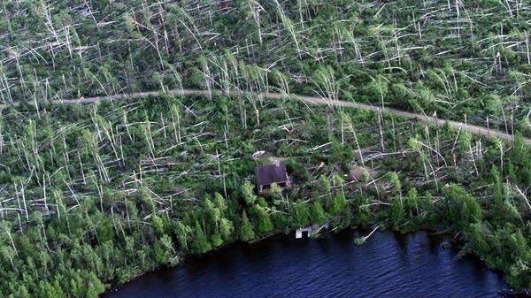 Gunflint Lake BWCA 1999 blowdown