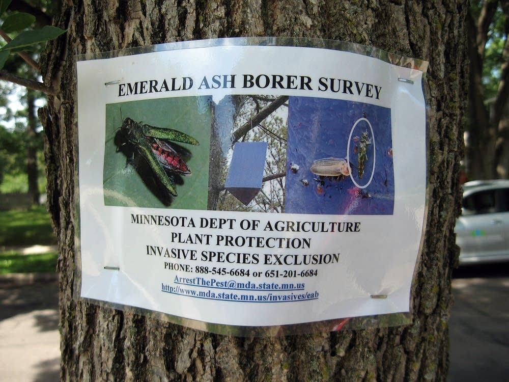 Ash borer sign