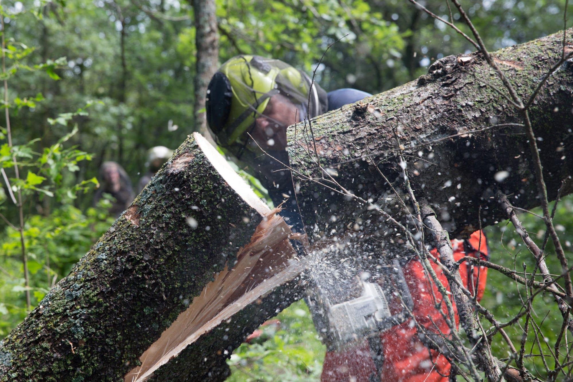 Jim Rakness cuts up a fallen tree