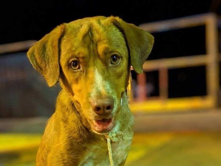 The rescued dog appeared to be growing stronger on the oil rig