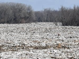 A massive ice jam clogs up the Minnesota River near Seven Mile Creek Park.