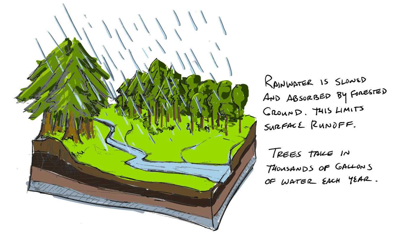 Forests slow rainwater protecting the land and water