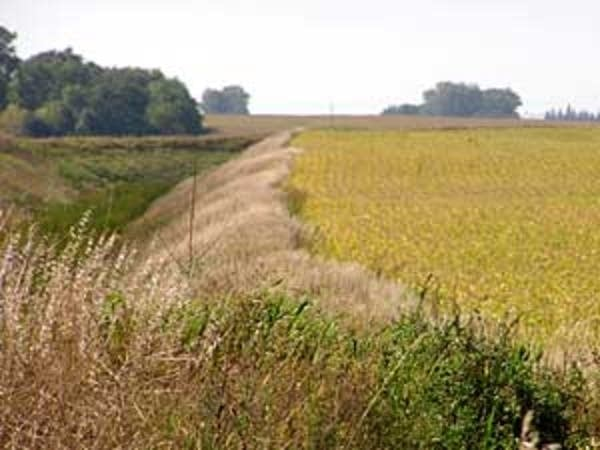 Crops are planted close to this ditch