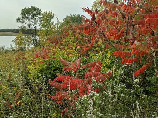 Fall color in Carver Park Reserve