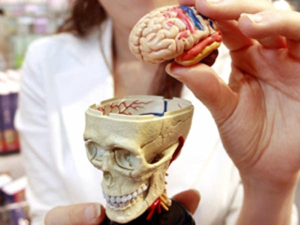 A toy model of the brain