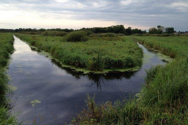 Carlos Avery wildlife area