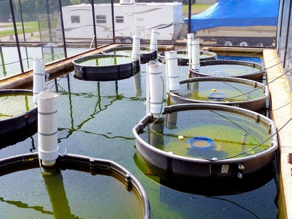 Fish ponds