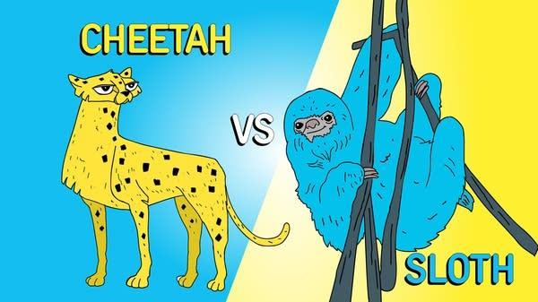 Bonus Episode_Cheetahs Sloths