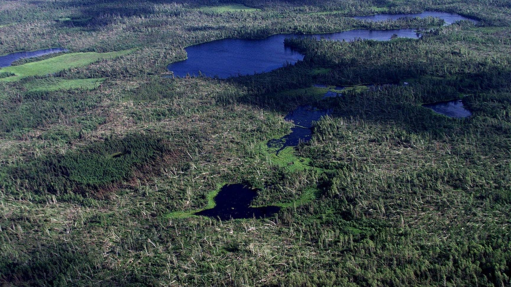 Boundary Waters 1999 blowdown