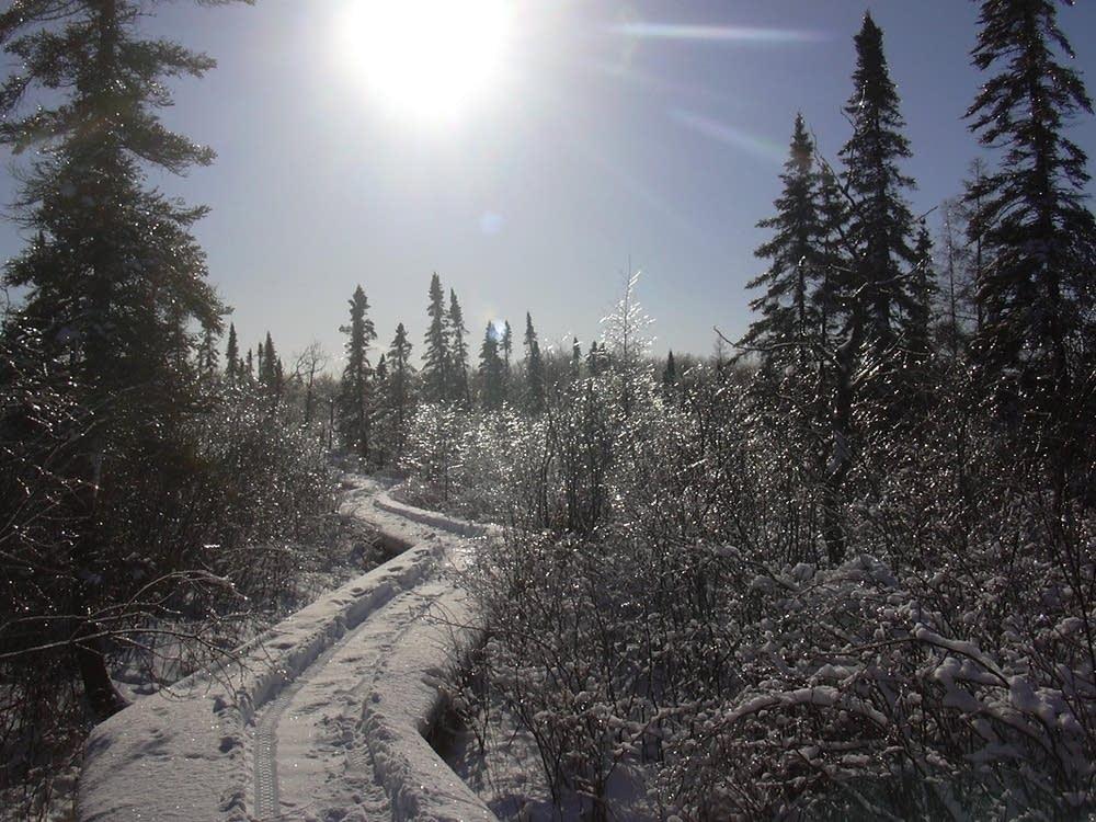 Winter bog walk
