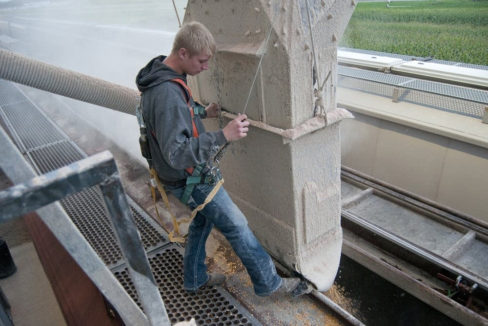 Kicking the grain feeder into place.