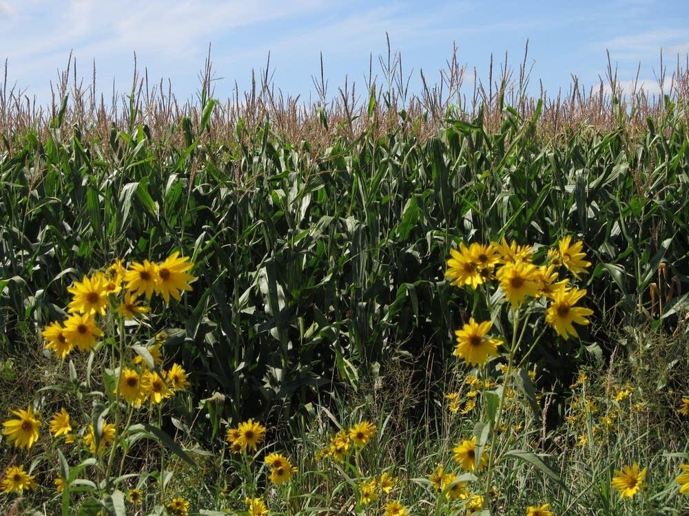 Native vegetation
