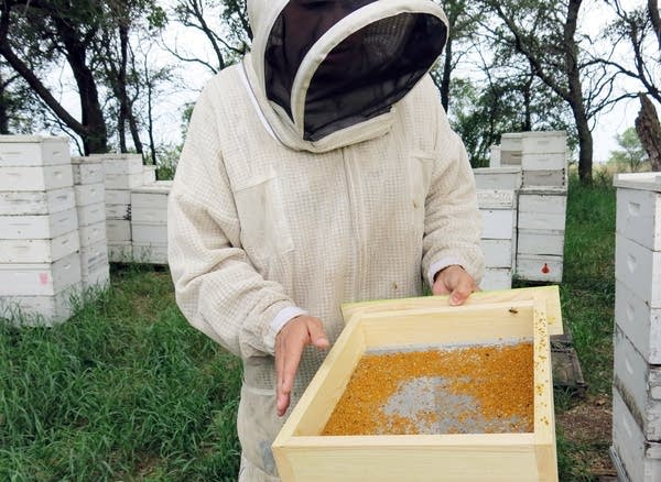 USGS scientist Clint Otto looked at a pollen trap