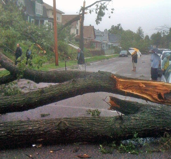 A downed tree in Minneapolis