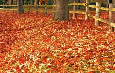9616e7 20150923 autumn leaves